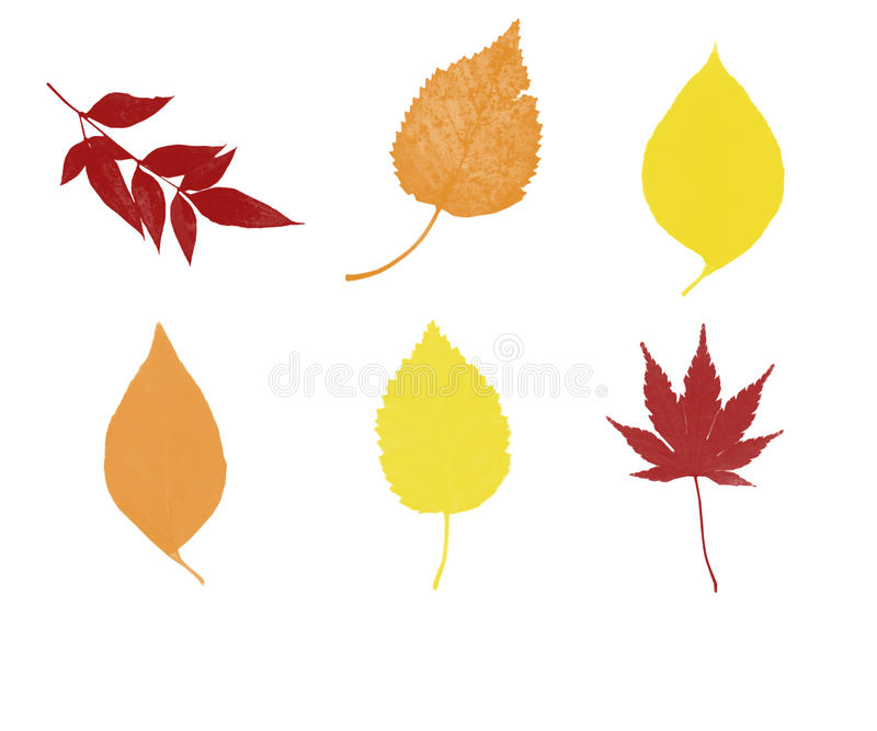 Six Fall Leaves. This is a digital art illustration. The illustration shows six fall leaves royalty free illustration
