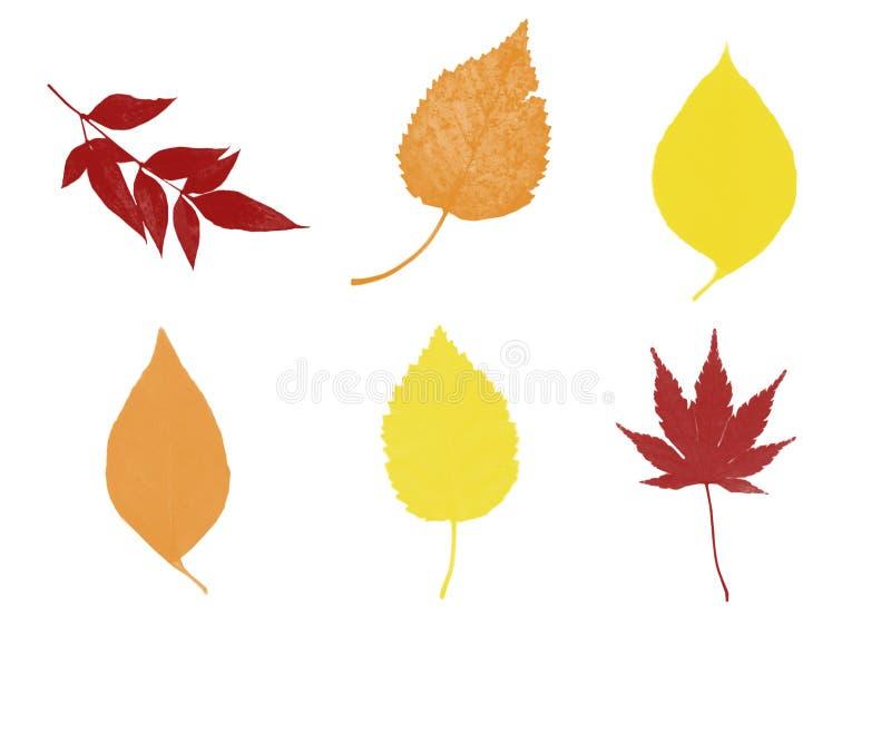 Six feuilles de chute illustration libre de droits