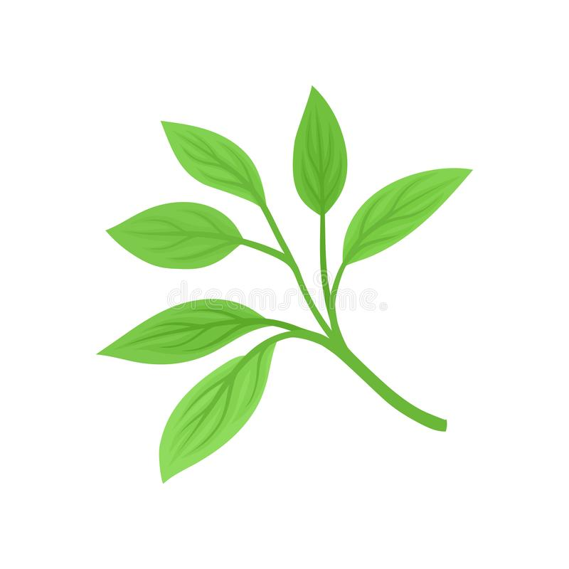 Six feuilles sur la tige Illustration de vecteur sur le fond blanc illustration libre de droits