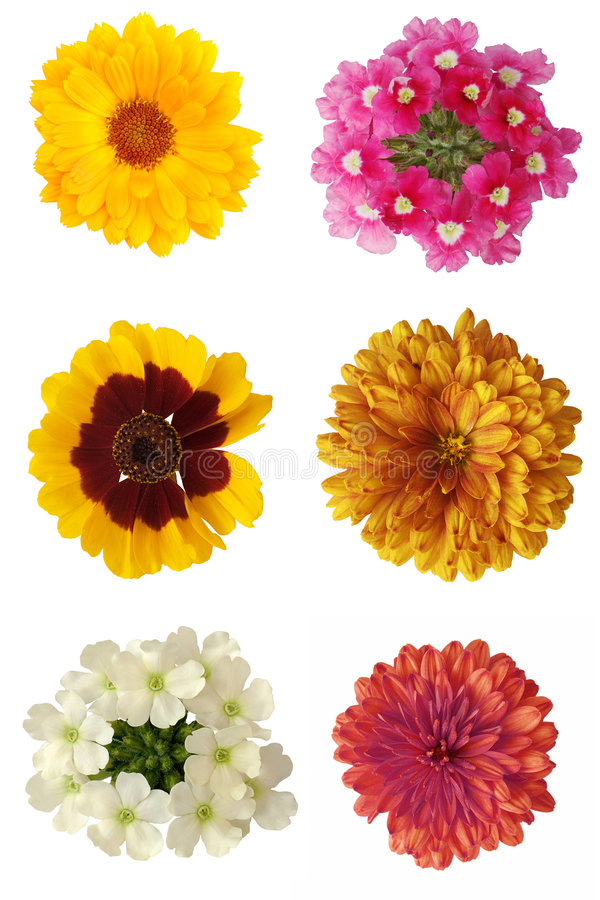 Six flowers. Six beautiful flowers isolated on a white background royalty free stock image