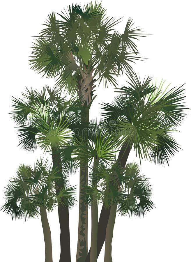 Six green palm trees group isolated on white. Illustration with palm trees isolated on white background vector illustration