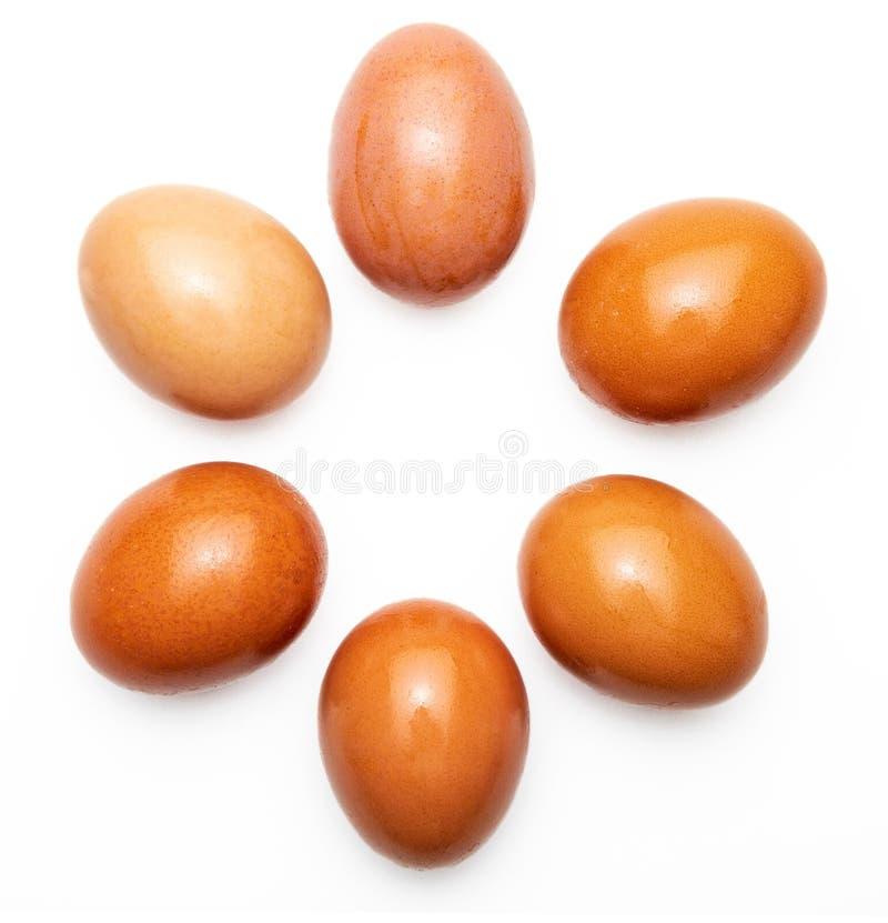 Six 6, half a dozen raw and fresh eggs. royalty free stock photos