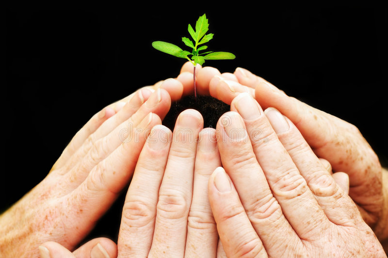 Download Six Hands Around Small Seedling Stock Image - Image: 7740419
