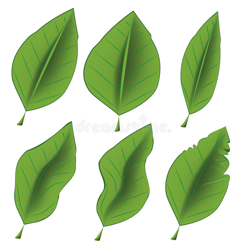 Download Six icons for leaf stock vector. Image of traditional - 34002962