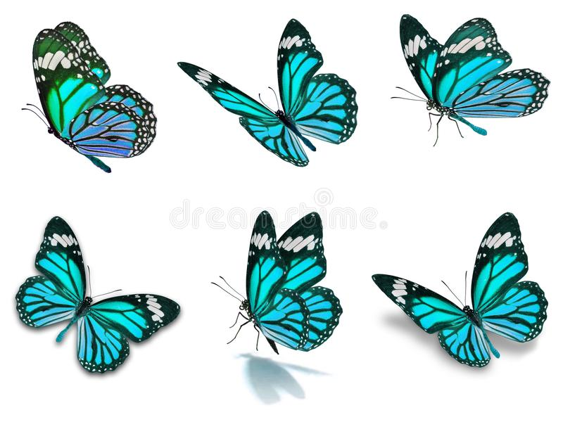 Six monarch butterflies set. Beautiful Six monarch butterflies set, isolated on white background royalty free stock photography