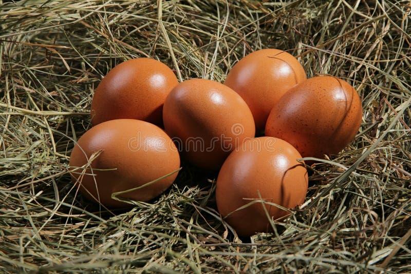 Six oeufs se trouvant sur un foin Pâques ou thème de village photo stock