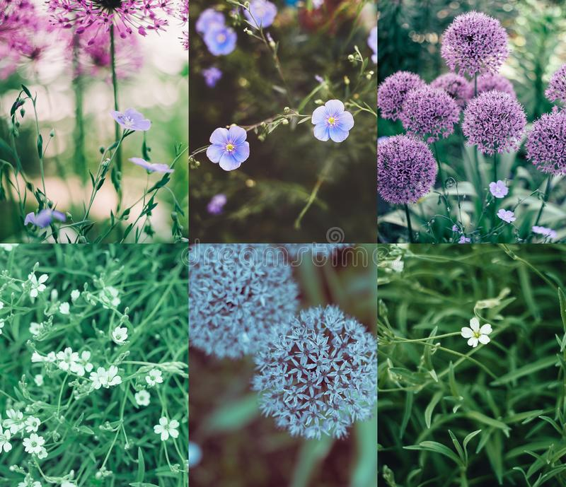 Purple flower collage mix stock photography
