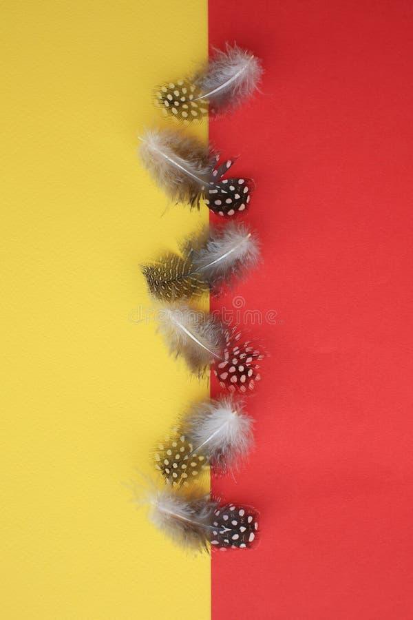 Six plumes pointillées de pintade sur rouge et jaune photographie stock libre de droits