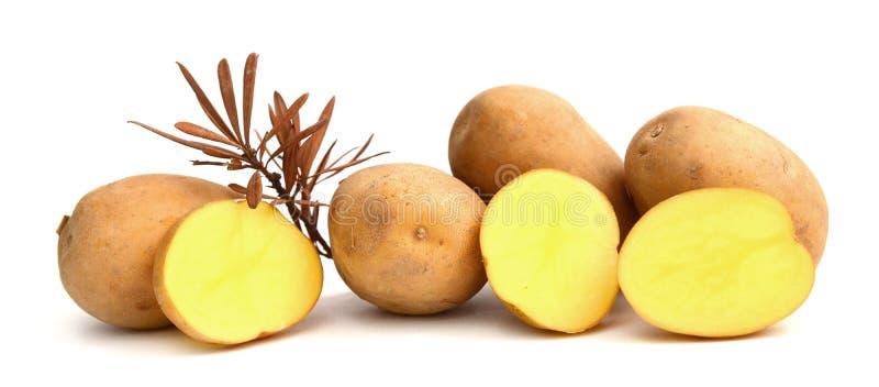 Six potatoes. Close up of potatoes on white background stock photo