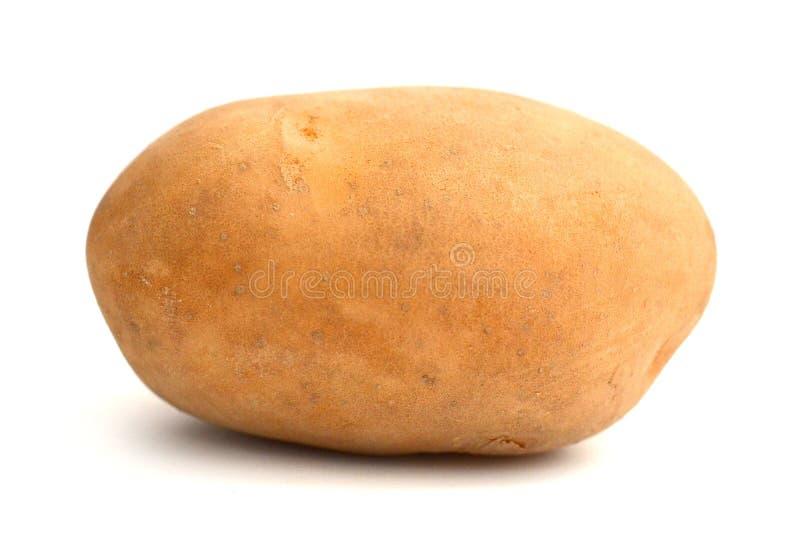 Six potatoes. Close up of potatoes on white background stock photography
