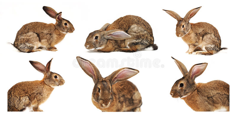 Six Rabbits On A White Background Royalty Free Stock Image