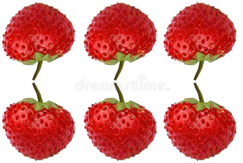 Six ripe strawberries. Vertical reflection. Fresh berries strawberries on a white background. Strawberries closeup. stock photos