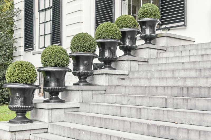 Six round shrubs placed next to a concrete stairway stock photo