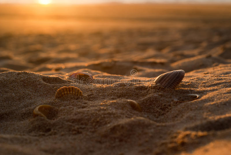 Six seashells sur le sable d'or image stock