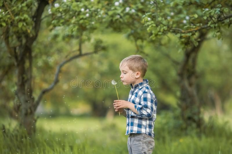 Six-year-old boy in a birch forest in full growth in the spring. a child licks a large Lollipop royalty free stock images