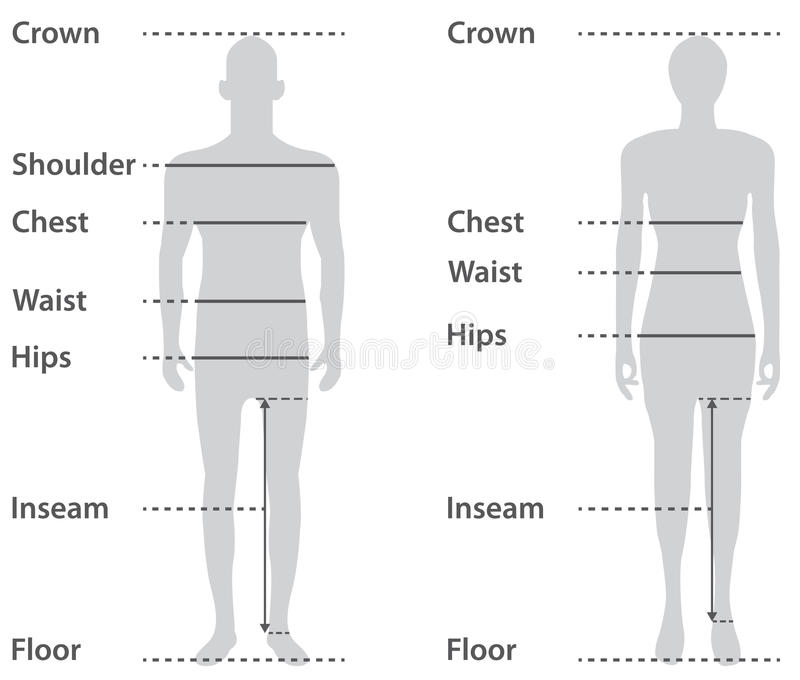Sizing on male and female body royalty free illustration