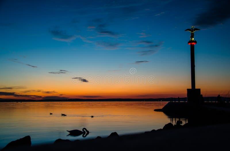 Sjö Balaton med svanen efter solnedgång fotografering för bildbyråer