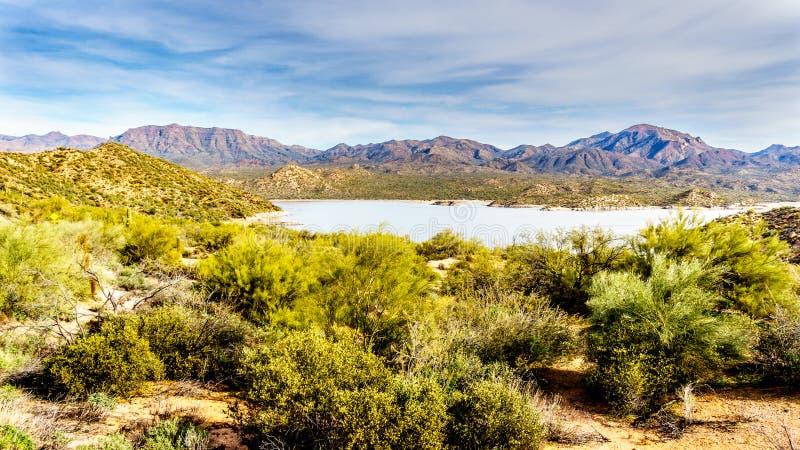 Sjö Bartlett som omges av bergen och många Saguaro och andra kakturs i ökenlandskapet av Arizona fotografering för bildbyråer