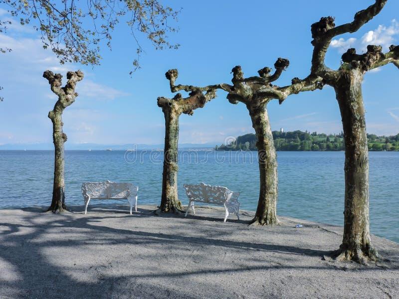 Sjö Constance med ensamma stolar och träd arkivbilder