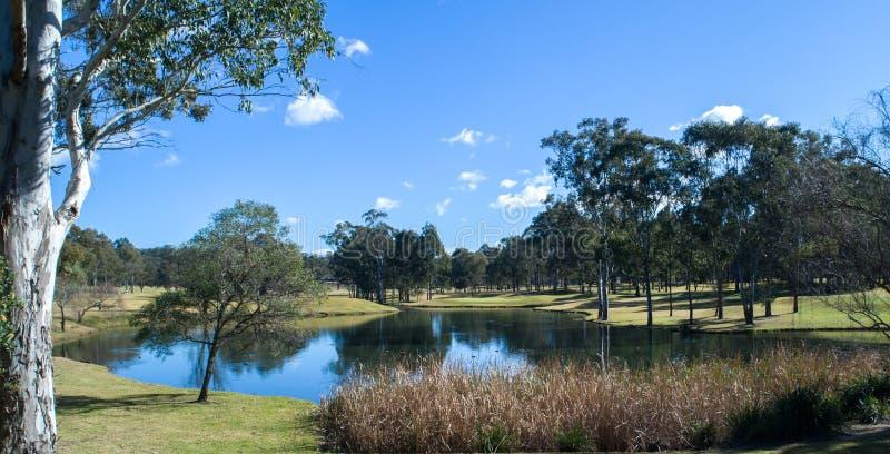 Sjö för golfbanavattenfara som omges av eukalyptuseukalyptusträd mot blå himmel royaltyfria foton