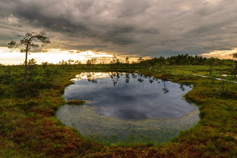 Sjö för myr för naturpanoramalandskap i Estland arkivfoto