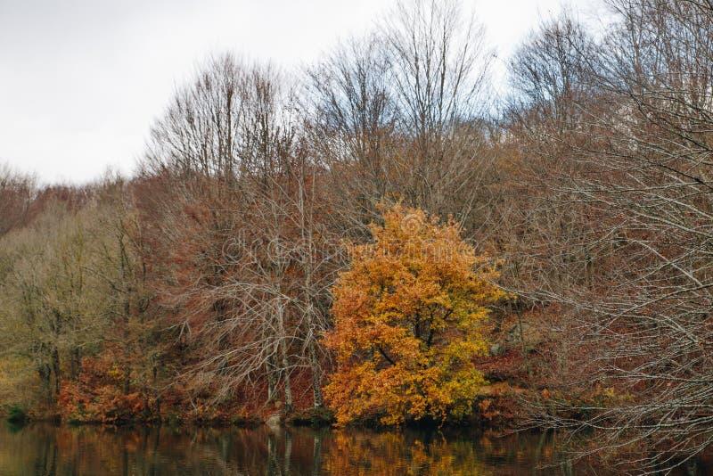 Sjö i Autumn Forest Landscape arkivbilder