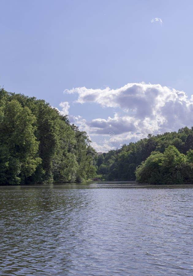 Sjö i skogen på den soliga sommardagen natur s?songer royaltyfria foton