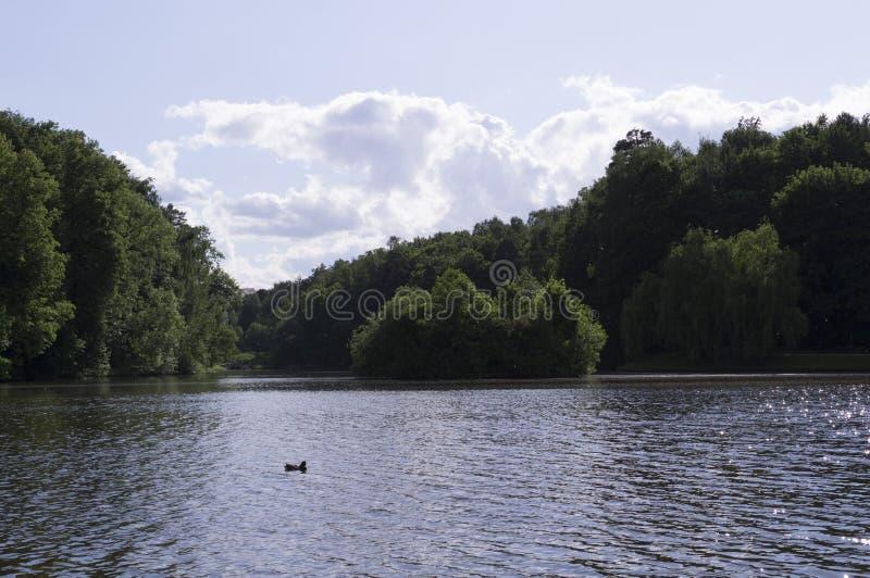 Sjö i skogen på den soliga sommardagen natur s?songer fotografering för bildbyråer