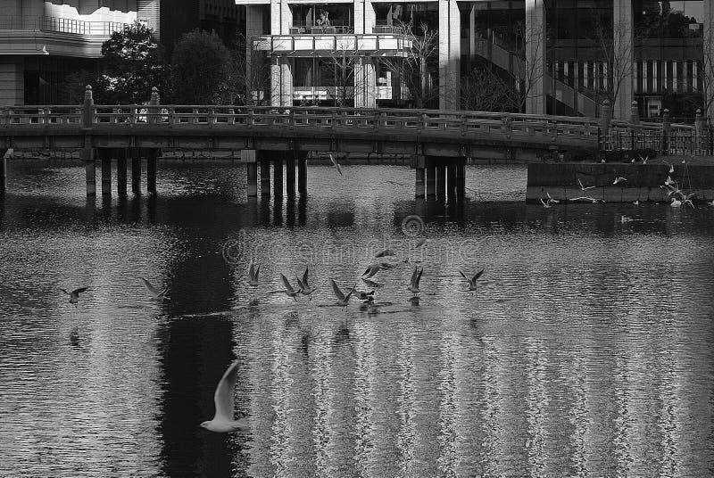 Sjö i Tokyo Japan med faunafåglar royaltyfri bild