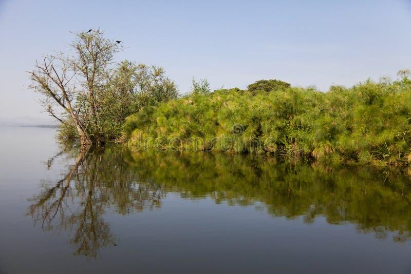 Sjö Kivu och krokodilö arkivbilder
