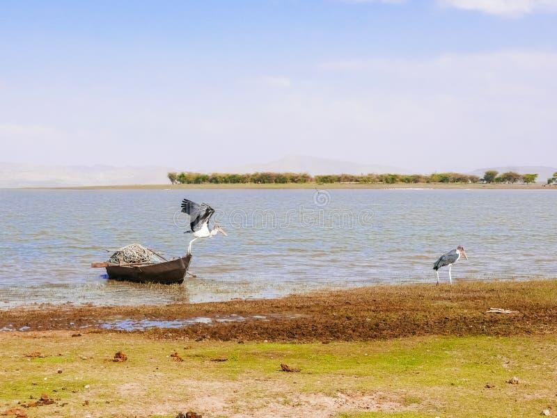 Sjö Malawi på den Chitimba stranden royaltyfri foto