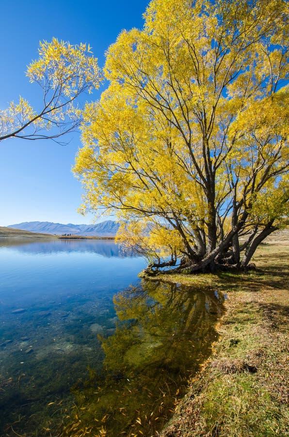 Sjö McGregor, Canterbury region, Nya Zeeland royaltyfria bilder