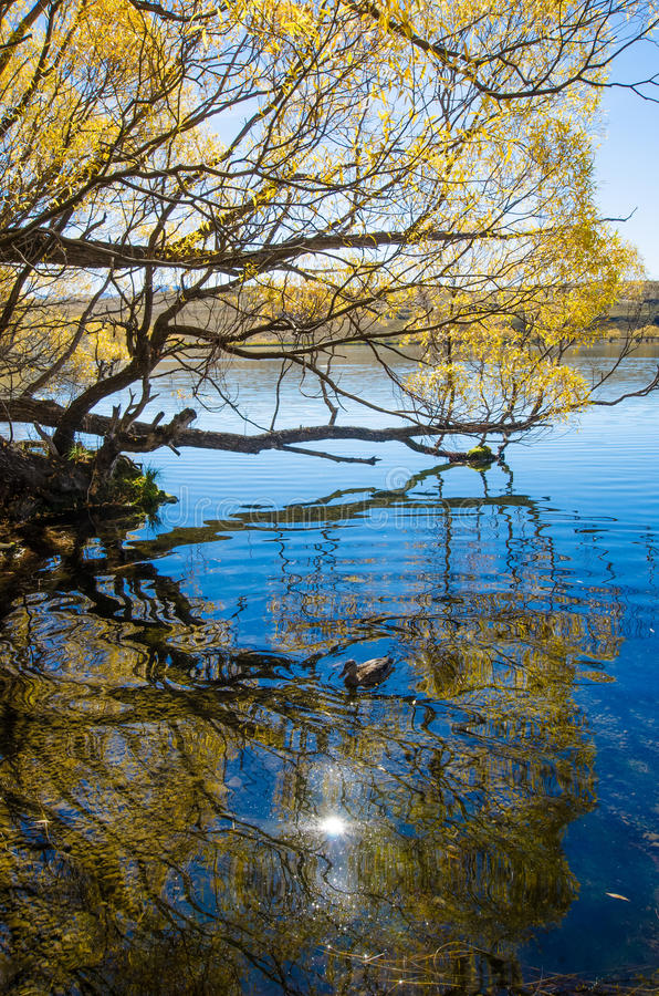 Sjö McGregor, Canterbury region, Nya Zeeland royaltyfria foton