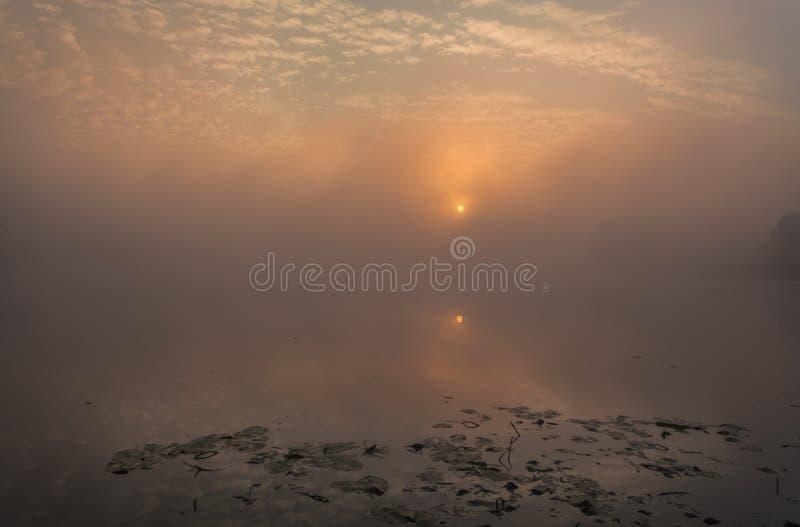 Sjö med dimman på soluppgång royaltyfria bilder