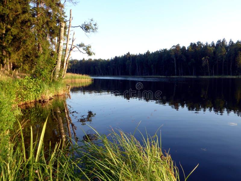 Sjö med guld- gräs och forste omkring i sommar i Polen royaltyfri fotografi
