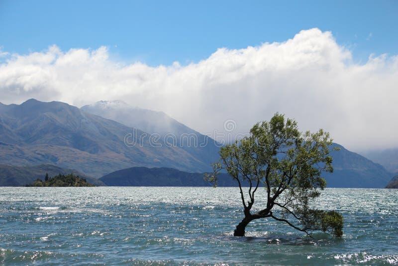 Sjö med trädet på landskap i Nya Zeeland royaltyfria foton