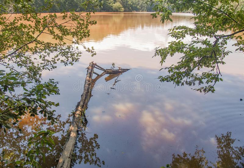 Sjö Norman State Park i North Carolina royaltyfria foton