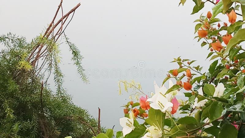 Sjö och blomma arkivbild