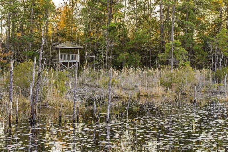 Sjö och Forest Hunting Blind. royaltyfria bilder