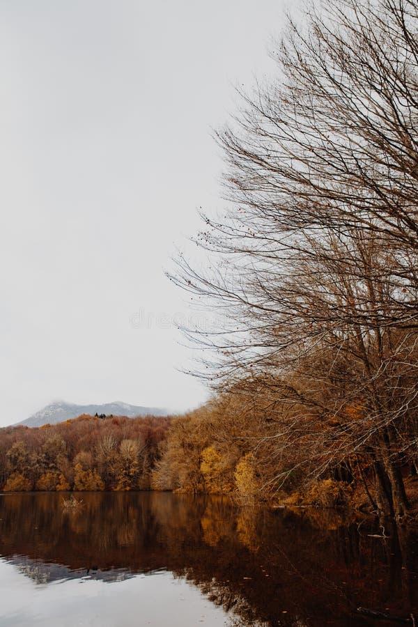 Sjö och lock i Autumn Forest arkivbilder