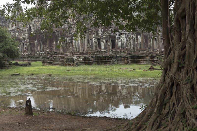 Sjö och träd i den Angkor Thom templet royaltyfri foto