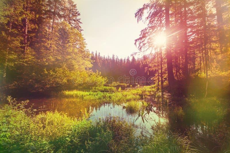 Sjö på soluppgång arkivfoton