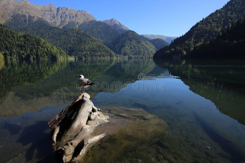 sjö Ritsa i Kaukasuset arkivbilder