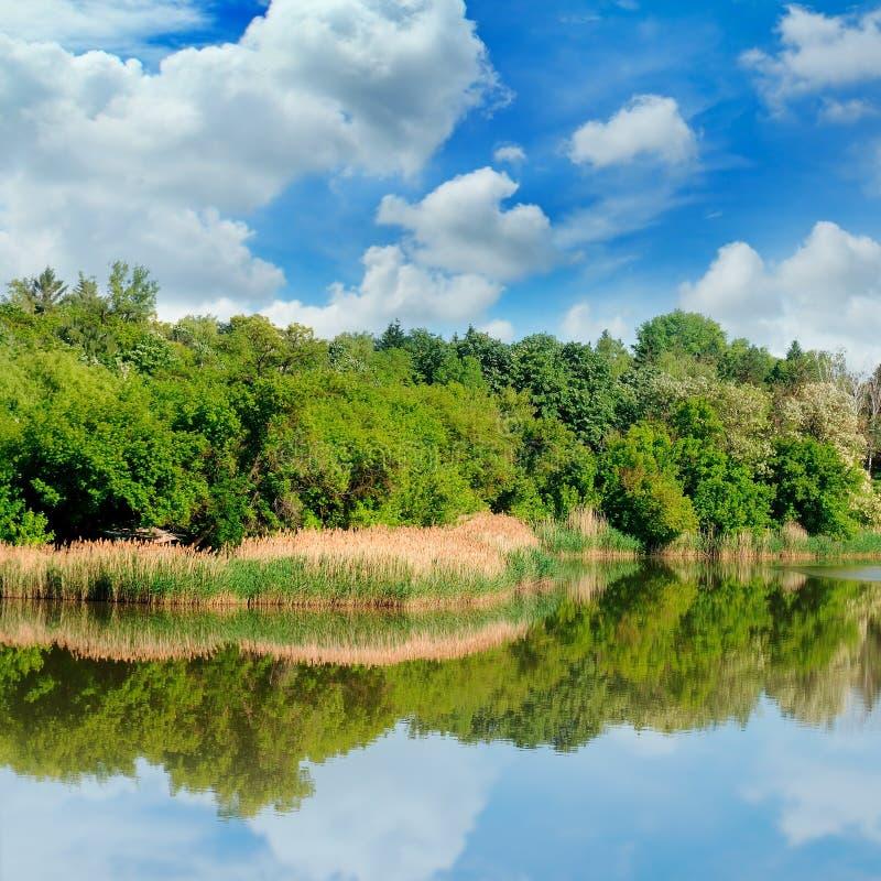 Sjö, sommarskog på bankerna och himmel royaltyfri bild