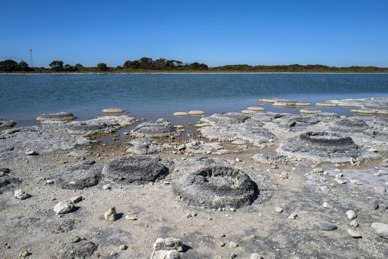 Sjö Thetis, västra Australien royaltyfri foto