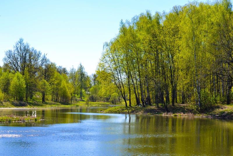 Sjö tidigt på våren Träd solig dag, blå himmel royaltyfria foton