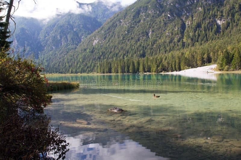 Sjö Toblach, Dolomites i södra Tyrol, Italien arkivbilder