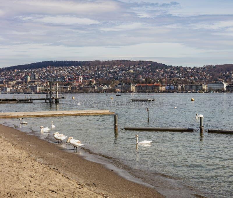 Sjö Zurich på en mulen dag i vår fotografering för bildbyråer