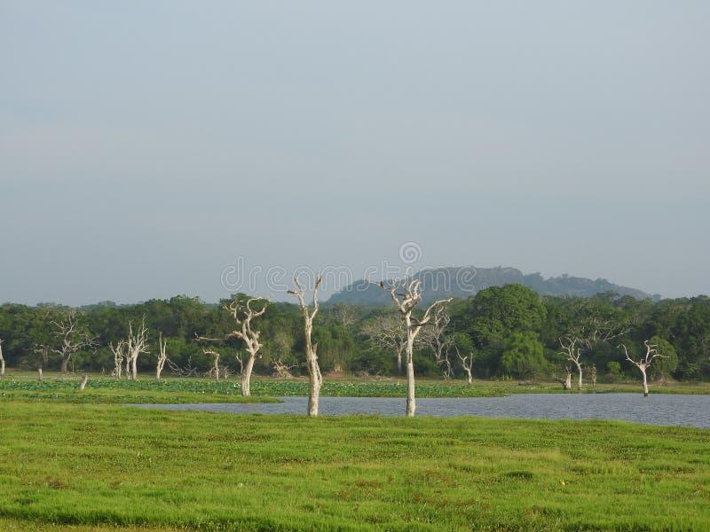 Sjöar, fåglar, natur och landskap i den Yala nationalparken, Sri Lanka royaltyfria foton