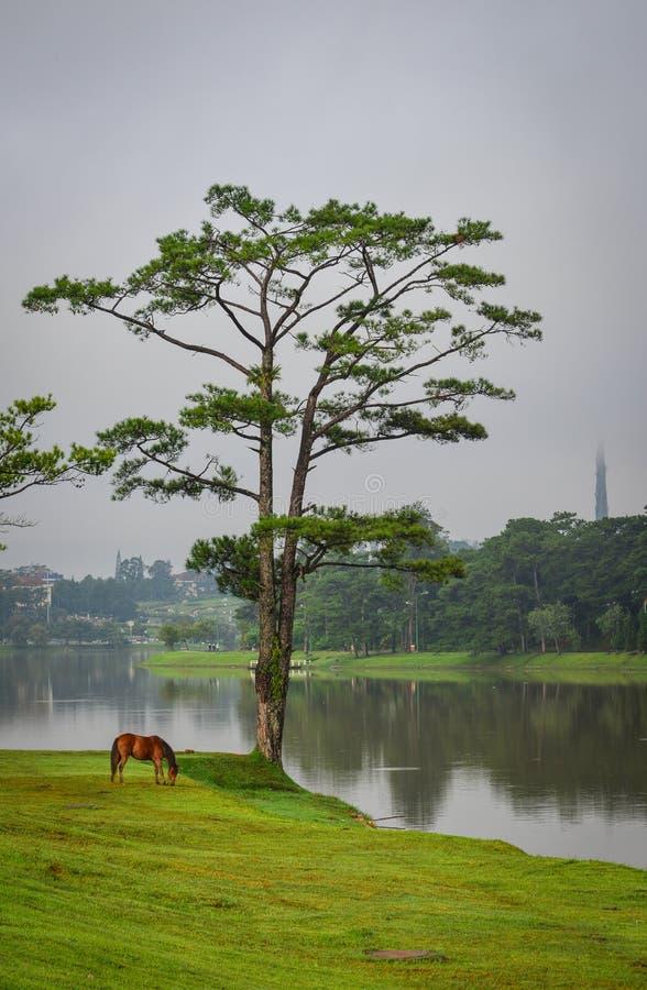 Sjölandskap i Dalat, Vietnam arkivfoton